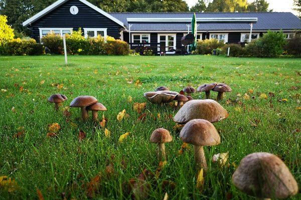 albertslund golfklub_svampe bane